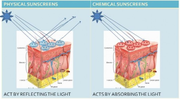 Figure 1 - Diagram showing how physical and chemical sunscreens act