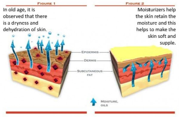 Figure 3 - Diagram showing how moisturizers prevent water loss from skin surface