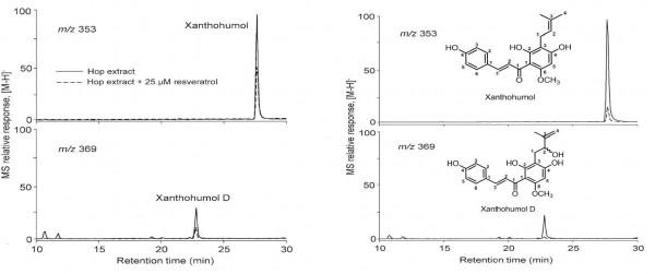 Figure 2: xanthohumol and xanthohumol D with resveratrol and without resveratrol