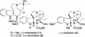Indole containing vinca alkaloids - Vinblastine, vincristine and vindoline.