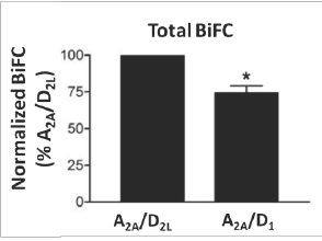 A2A-D2L and A2A-D1 GPCR oligomerization detected through BiFC.