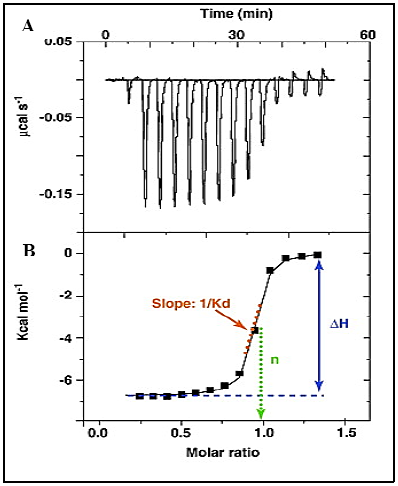 calculating heat capacity ratios from raw data In thermal physics and thermodynamics, the heat capacity ratio or adiabatic index  or ratio of  equations[show]  which match experimental values so closely that  there is little need to develop a database of ratios or cv values values can.